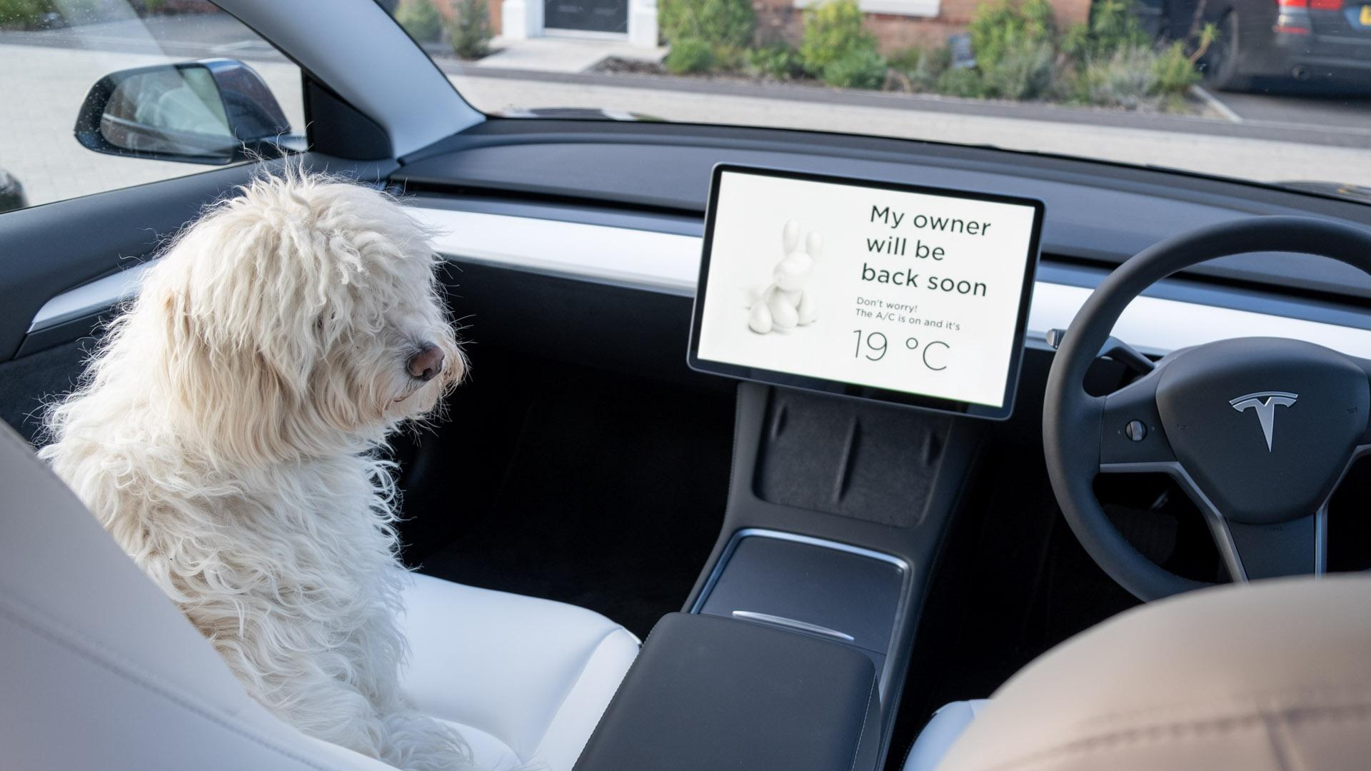 Tesla Model 3 dog mode